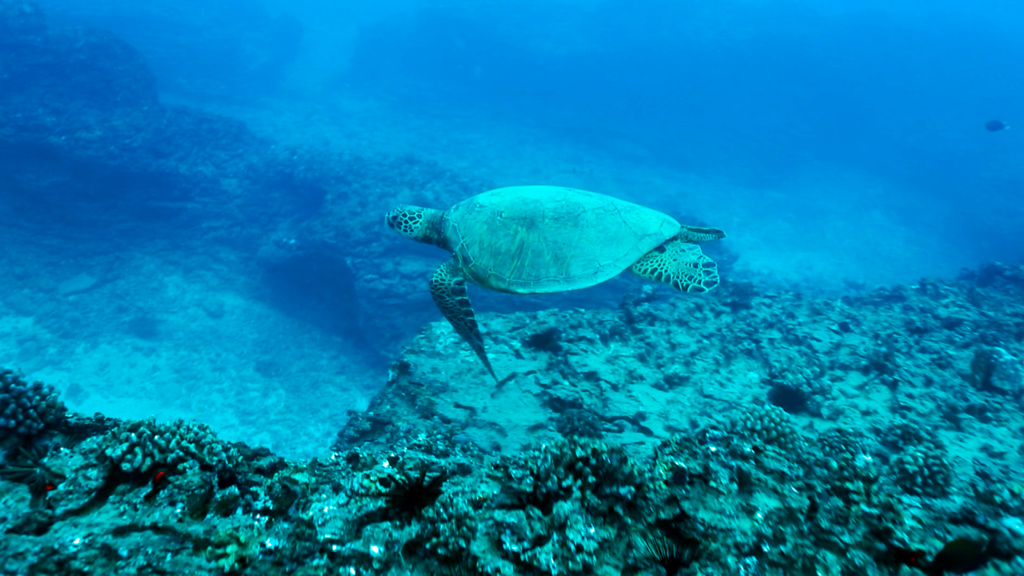 A sea turtle swims through blue water, near the ocean floor.